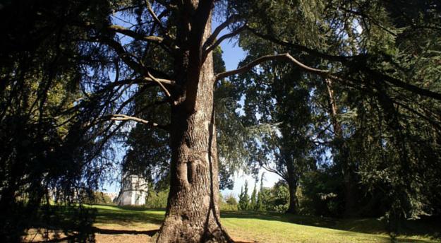 arbre au parc caradoc de Bayonne